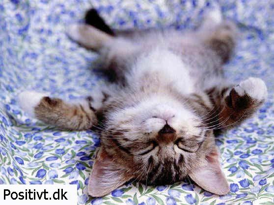 Biler sjove kager sjove mennesker vittigheder sjove billeder sød kat